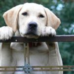 飼い犬蹴る女は誰?近所迷惑問題おばさん顔画像・名前!犬は現在紫友会で保護され里親募集も?
